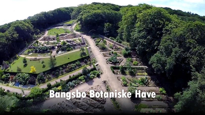 Om de botaniske samlinger – Bangsbo Botaniske Have