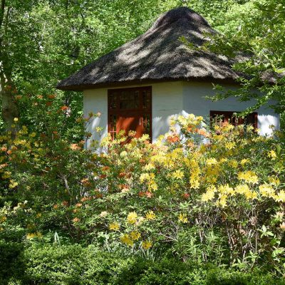 The-huset indrammet af bl.a. Rhododendron luteum - Guld-Azalea